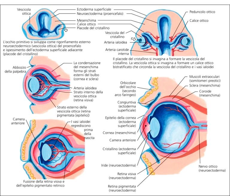PROTESI PEDIATRICHE   Dalpasso protesi oculari